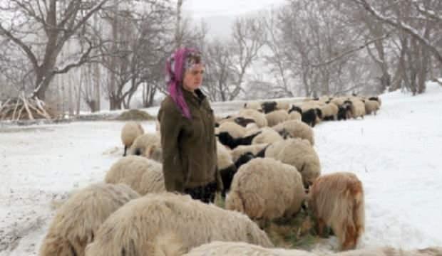 Tarım Bakanlığı mağdurların yanında oldu, kimine inek kimine koyun