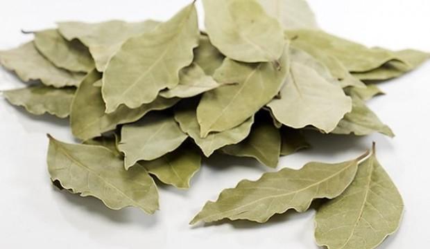 Defne yaprağının faydaları nelerdir? Defne yaprağının besin değeri ve kullanım alanları