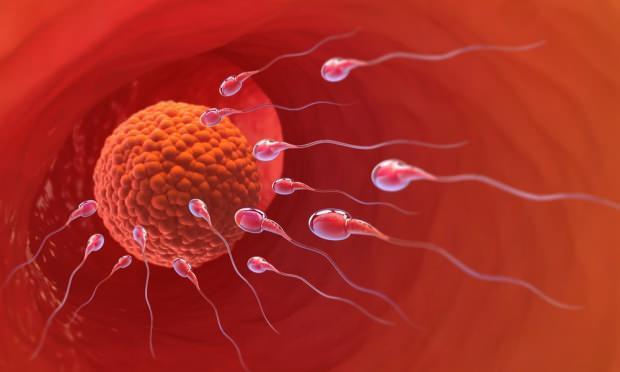 Doğurganlık dönemi nasıl hesaplanır? Yumurtlama günü takvimi