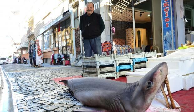 'Bu sene Marmara'da çok fazla köpek balığı var'