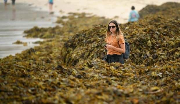 Neredeyse insan boyunda! Sidney'de plaja inenler şaştı kaldı