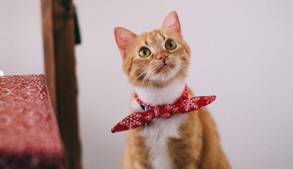 Kedilere tuvalet alışkanlıkları nasıl kazandırılır? Kedilerde tuvalet eğitimi