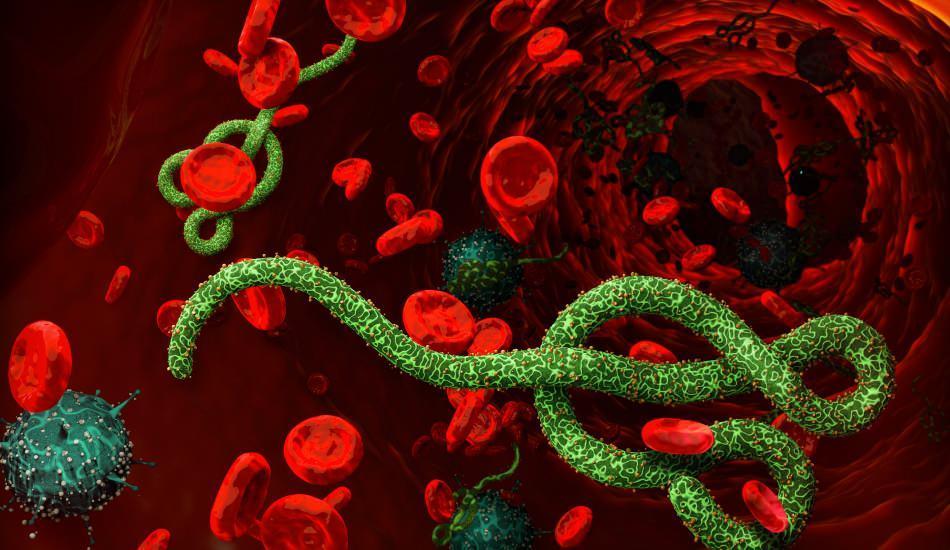 Ebola virüsü nedir? Ebola virüsü nasıl bulaşır? Ebola virüsünün belirtileri nelerdir?