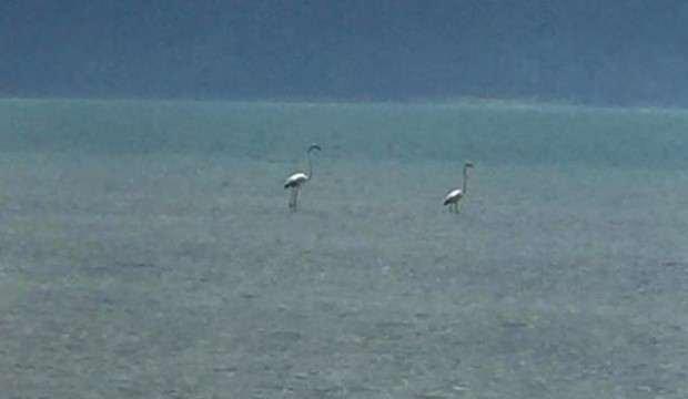 Burası Eğirdir Gölü! İlk kez görüldüler