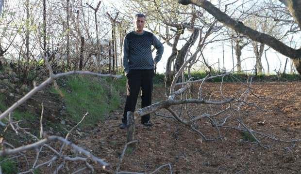 Fıstık ağaçlarını bu halde bulunca hayatının şokunu yaşadı