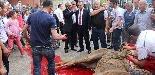 CHP'li başkan deve keserek göreve başladı