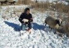 Koyun ve yeni doğan yavrusu donmak üzereyken bulundu