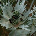 Karadeniz'in tıbbi ve aromatik bitki envanteri çıkarılacak
