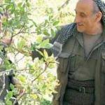 PKK'da bir tabur çocuk!
