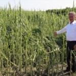 """Adana'da tarım arazilerini dolu """"vurdu"""""""