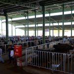 Kocaeli'de modern hayvan pazarı açıldı
