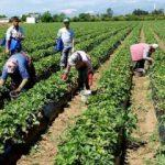 Tarım-ÜFE eylül ayında yüzde 1,01 arttı