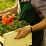 3 Türk girişimciden organik tarım için önemli bir buluş