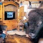Evinde 13 yıldır buffalo besliyor
