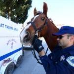 """Antalya sahillerinin güvenliği """"atlı polislere"""" emanet"""