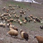 Çoban deyip geçmeyin, maaşı dudak uçuklatıyor