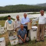 Kumluca'da narenciye balı hasadı başladı