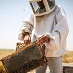 Bombus arısı kullanan yetiştiricilere destek