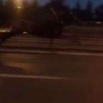 E-5'te son sürat at arabası şaşırttı