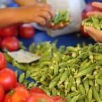 Organik tarım rekora koşuyor