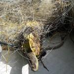 Balıkçı ağlarına takılan su kaplumbağaları kurtarıldı