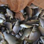 'Türkiye'de balık tüketimi dünyanın gerisinde'