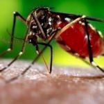 Zika virüsü kansere umut oldu!