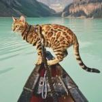 Seyahat fotoğraflarıyla fenomen olan kedi 'Suki'