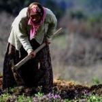 Evde-tarlada çalışan kadına sosyal koruma
