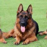 Köpeklere 6 bin lira emeklilik maaşı!