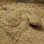 Görenleri şoke etti! Kumda böyle kamufle oldu