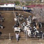 Ucuz süt için 'aracı azalsın' önerisi