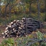 Bozkırın da gelir getiren ormanları oldu