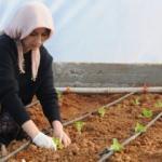 Kadın çiftçiler ekonomiye katkı sağlıyor...