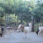 Türkiye'de ilk! Ziyaretçi akınına uğruyor