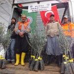 Silifke'de çiftçilere zeytin fidanı dağıtıldı