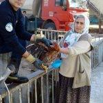 Dereye düşen tavukları itfaiye kurtardı