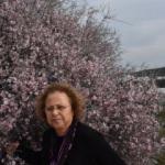 Antalya kış mevsiminde baharı yaşıyor
