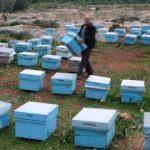 Çalınan 778 arı kovanından 300'ü bulundu