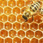 Rüyada arı görmek ne anlama gelir? Rüyada arı görmenin detaylı tabiri!