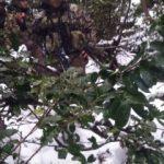 Trabzon'da PKK'ya operasyonlar devam ediyor!