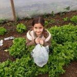 Fatsa'da öğrenciler sebze yetiştiriyor