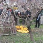 Tokat'ta budamak istediği ağaçtan düşen kişi öldü