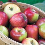 Meyvenin sağlıklı olduğu nasıl anlaşılır?