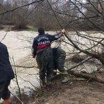 Irmaktaki adacıkta mahsur kalan inekleri itfaiye kurtardı
