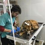 Isparta'da 18 köpek ölü bulundu