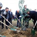 Başbakan Yardımcısı Işık, Afrin şehitleri anısına fidan dikti