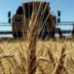 Ukrayna'dan Türkiye'ye buğday önerisi