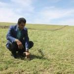Bismil'de dolu ekinlere zarar verdi