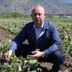 Tokat'ta don üzüm üreticisini olumsuz etkiledi